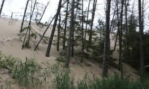 Sanddünen an der Ostsee